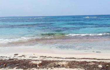 OCN organiza paseo al mar